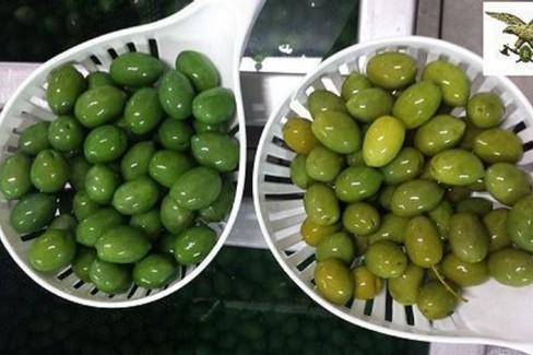 La truffa delle olive verniciate con solfato rame. Sequestrate 85 tonn.